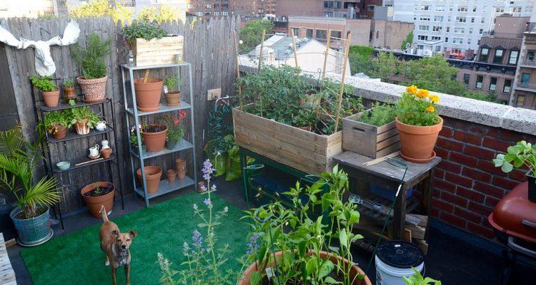 maak van je balkon een tuin