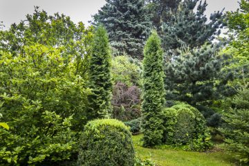Fijnspar in je tuin