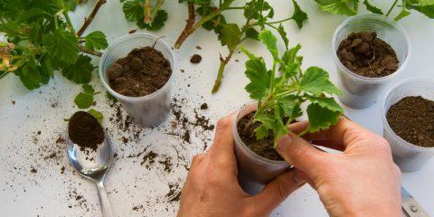 welke planten stekken op water