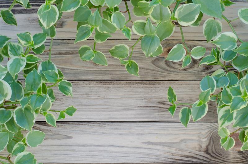 winterharde groenblijvende planten