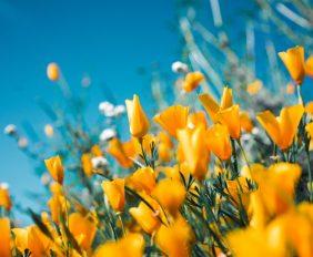 bloementuin