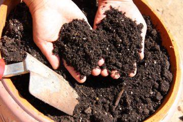 verschil tussen potgrond en tuinaarde