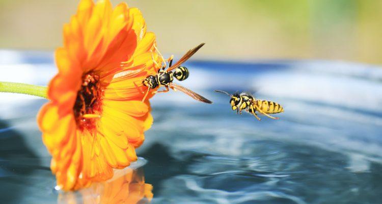 tips om wespen weg te houden