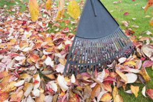Herfst in de tuin