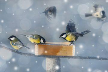 een vogelvriendelijke tuin in de winter