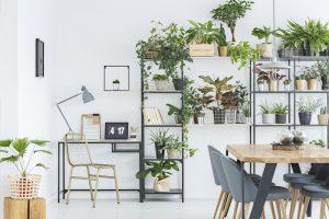 planten in je thuiskantoor