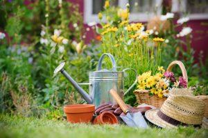 Starten met tuinieren