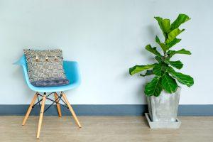 vioolbladplant-tips