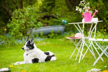 hondvriendelijke tuin maken
