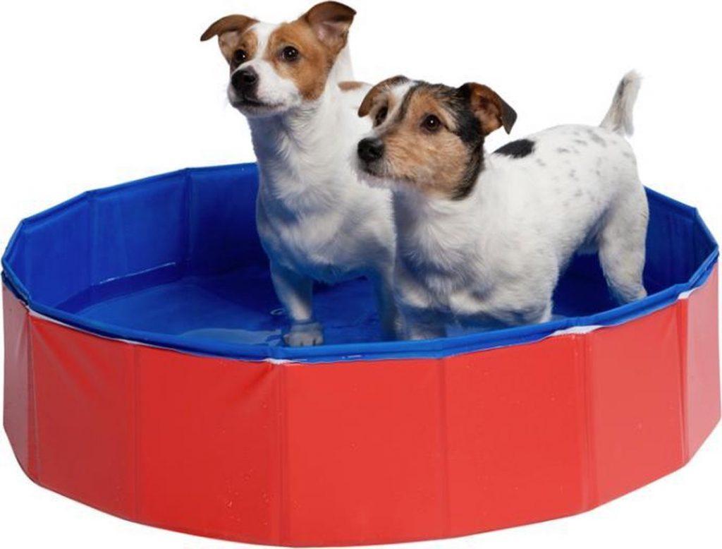 Premium hondenzwembad