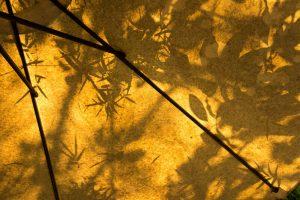 schaduwrijke plekken in je tuin creëren